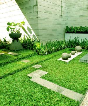 Rumput-gajah-mini-untuk-taman-rumah