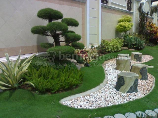 rumput jepang untuk taman rumah