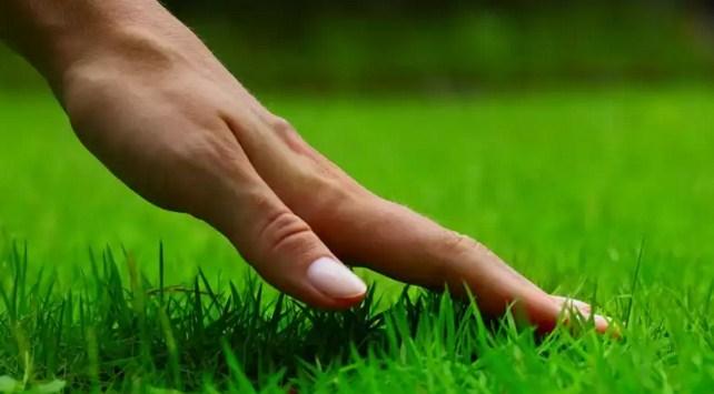 tips-merawat-rumput-taman
